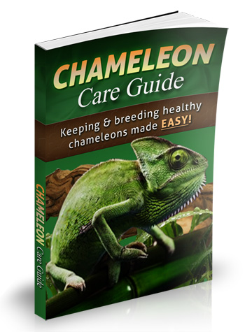 chameleon how to take care book