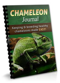 chameleon medical problems